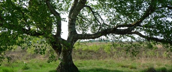 עץ הדאגה או מתי וכיצד לעסוק במחשבה